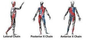 Anterior Chain, Posterior Chain, Lateral Chain