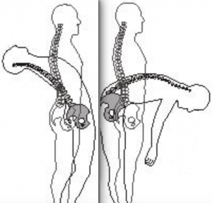 Spinal Flexion Extension - Spinal Loosening